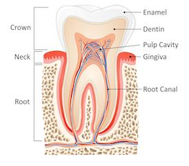 Root Canal Therapy Monroe Township NJ | Monroe Dental Group